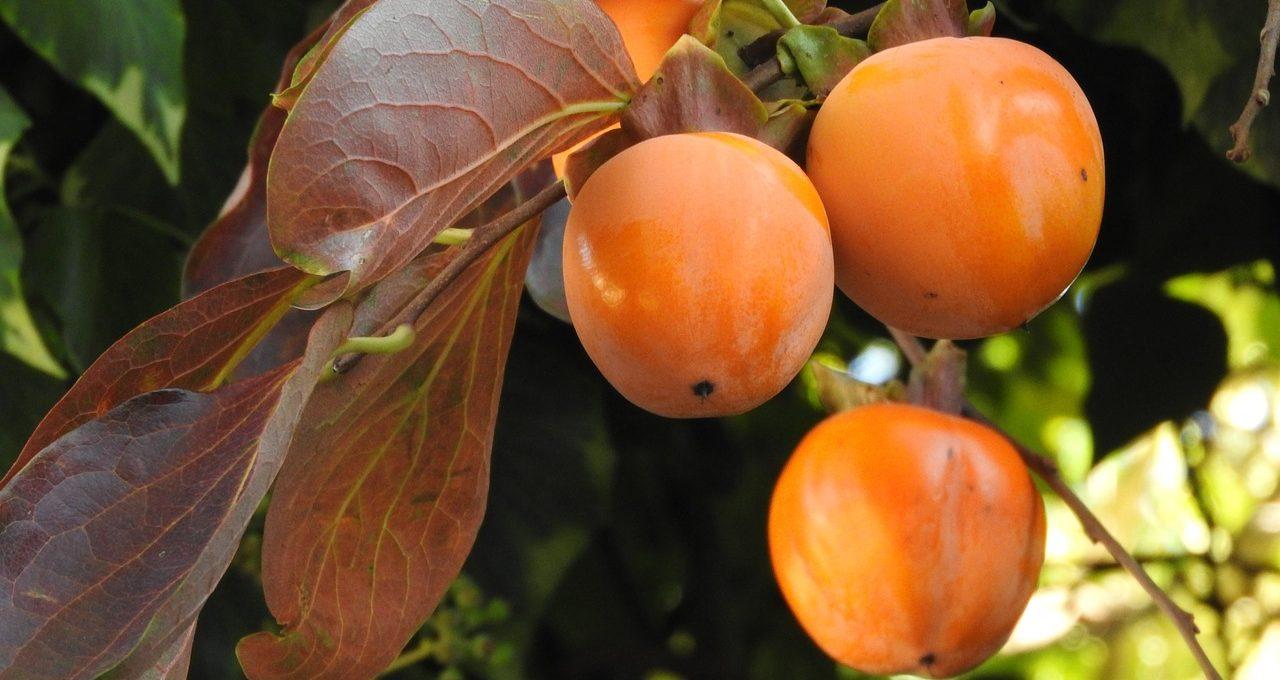 Owoce kaki – kto je lubi ?